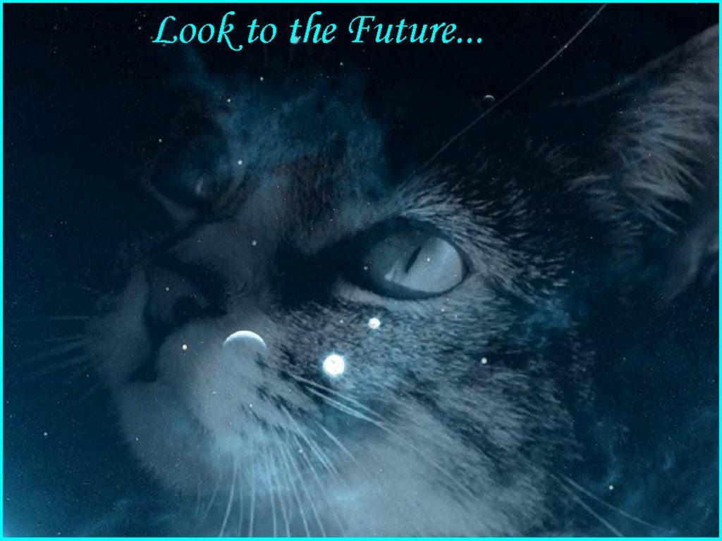 pics photos warrior cats desktop background wallpaper